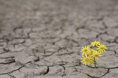 "Virtual Sunday Gathering: ""Resilience"""