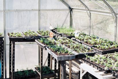 Greenhouse and Garden Building